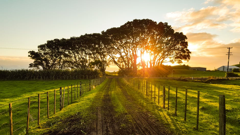 The 21st Century Farm